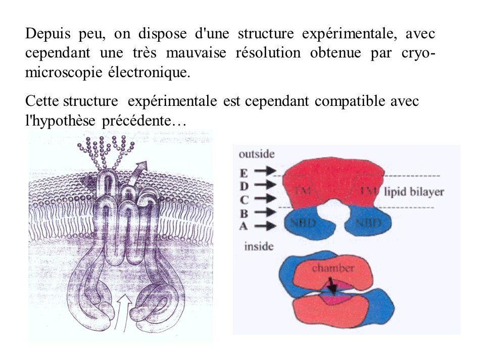 Depuis peu, on dispose d une structure expérimentale, avec cependant une très mauvaise résolution obtenue par cryo-microscopie électronique.