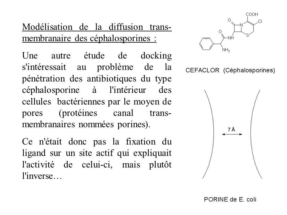 Modélisation de la diffusion trans-membranaire des céphalosporines :