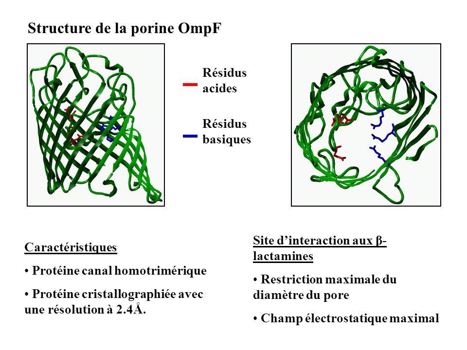 Structure de la porine OmpF