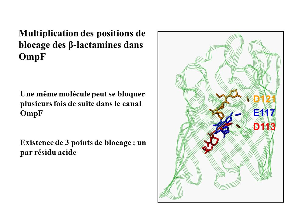 Multiplication des positions de blocage des β-lactamines dans OmpF
