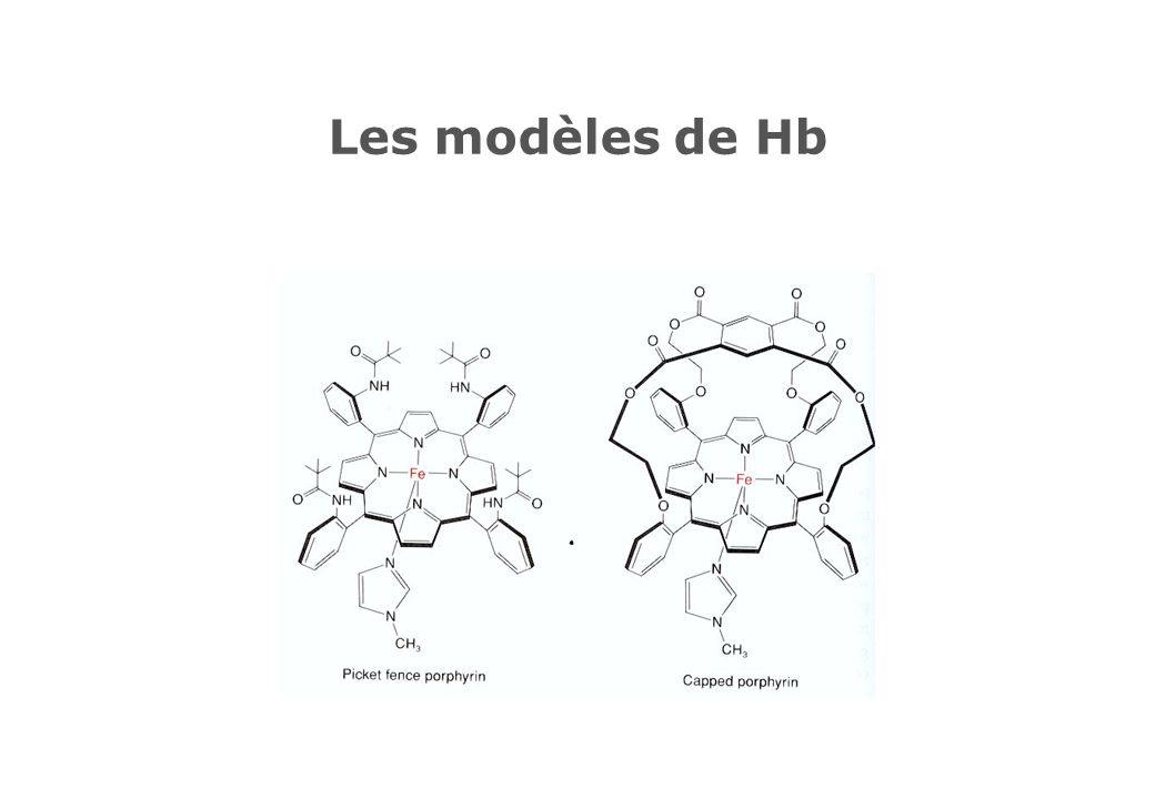 Les modèles de Hb