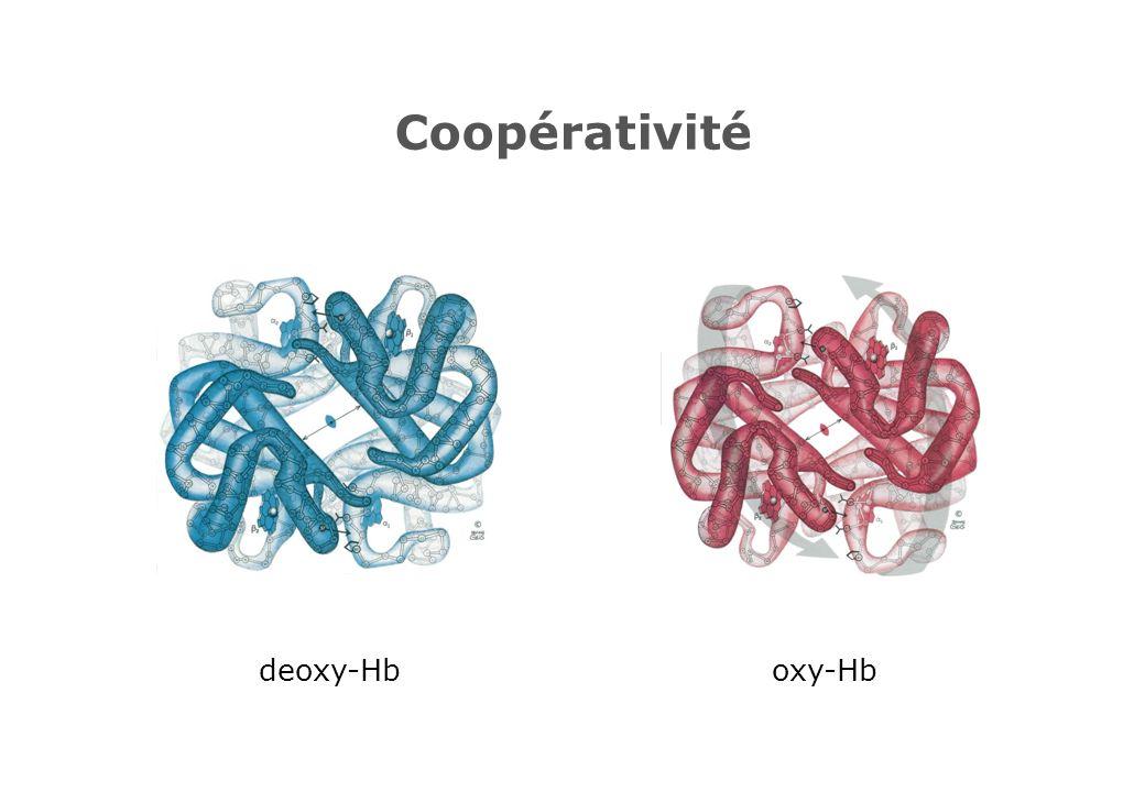 Coopérativité deoxy-Hb oxy-Hb