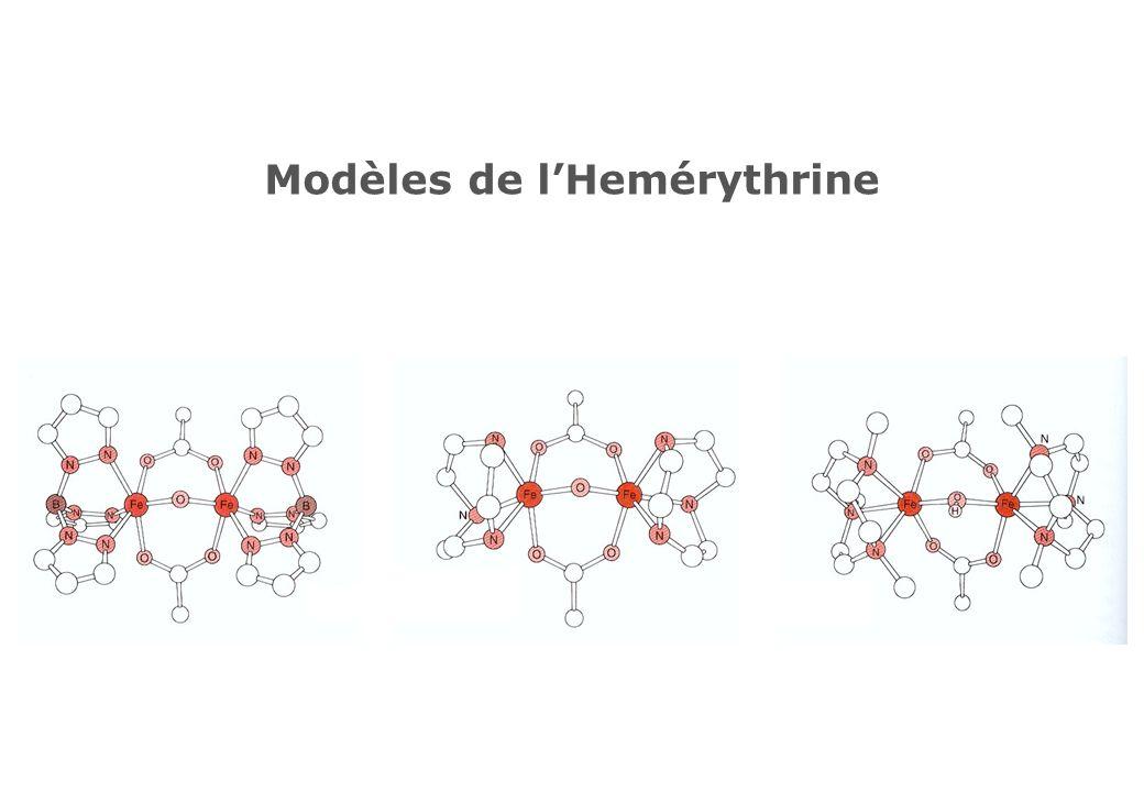 Modèles de l'Hemérythrine