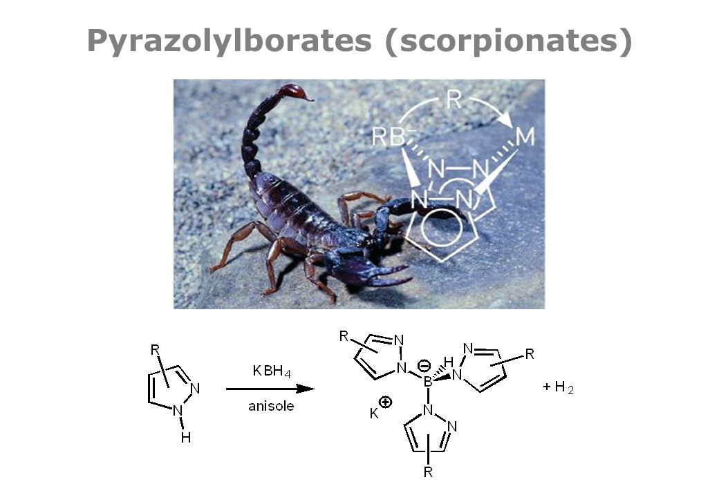 Pyrazolylborates (scorpionates)