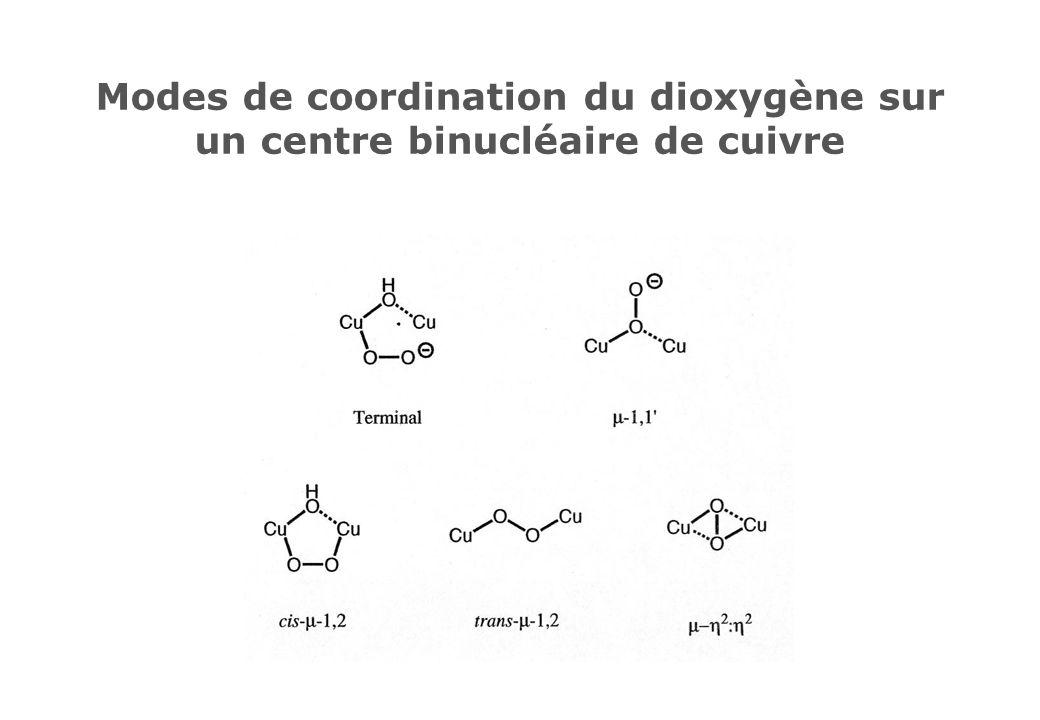 Modes de coordination du dioxygène sur un centre binucléaire de cuivre