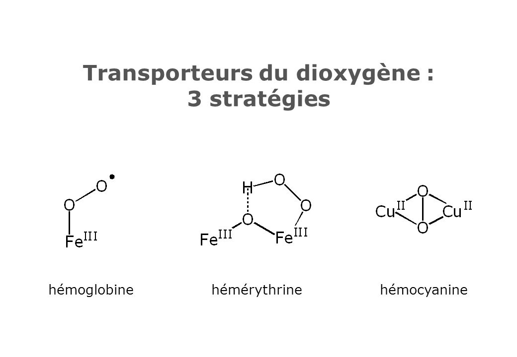 Transporteurs du dioxygène : 3 stratégies