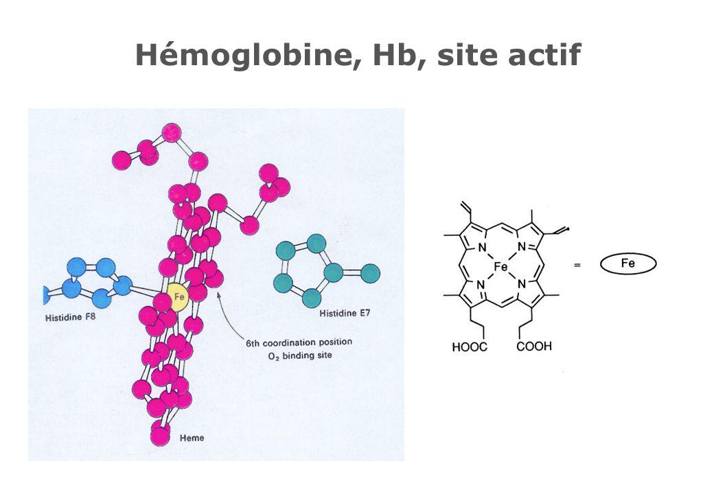 Hémoglobine, Hb, site actif
