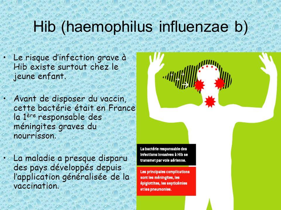 Hib (haemophilus influenzae b)