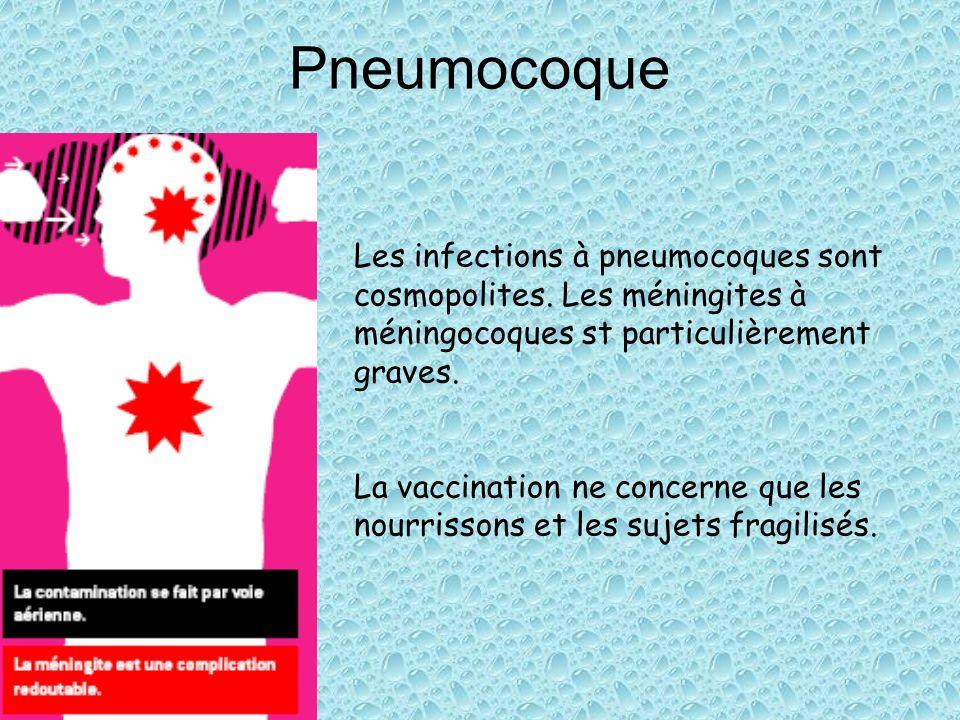 PneumocoqueLes infections à pneumocoques sont cosmopolites. Les méningites à méningocoques st particulièrement graves.