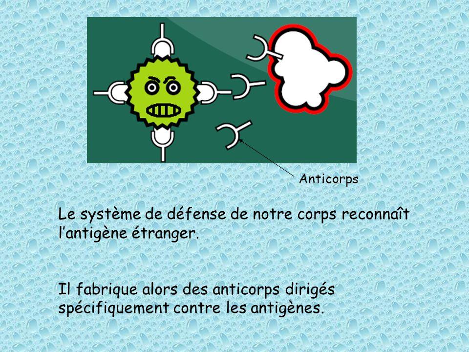 Le système de défense de notre corps reconnaît l'antigène étranger.