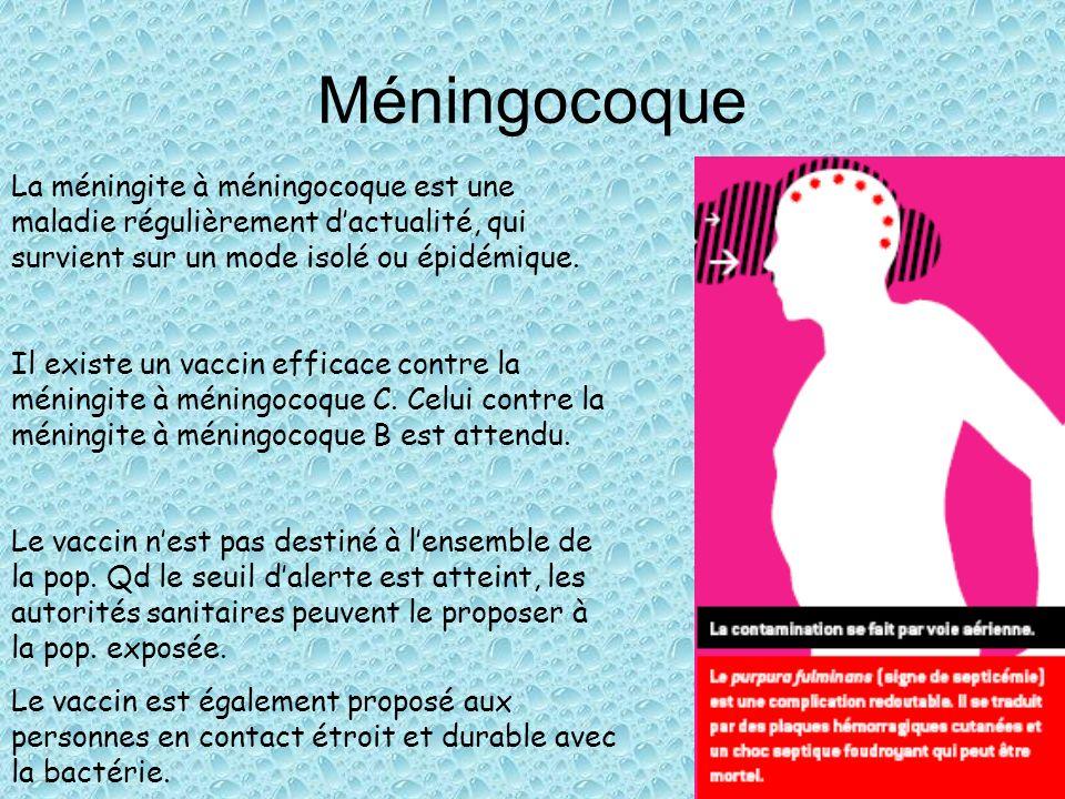 Méningocoque La méningite à méningocoque est une maladie régulièrement d'actualité, qui survient sur un mode isolé ou épidémique.