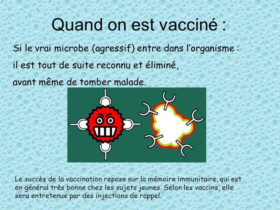 Quand on est vacciné :Si le vrai microbe (agressif) entre dans l'organisme : il est tout de suite reconnu et éliminé,