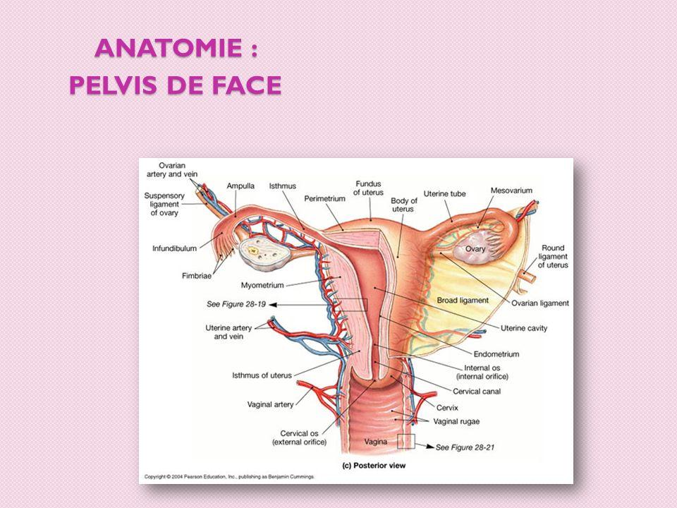 ANATOMIE : pelvis de face