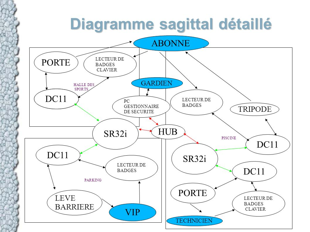 Diagramme sagittal détaillé