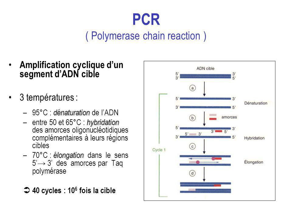 PCR ( Polymerase chain reaction )