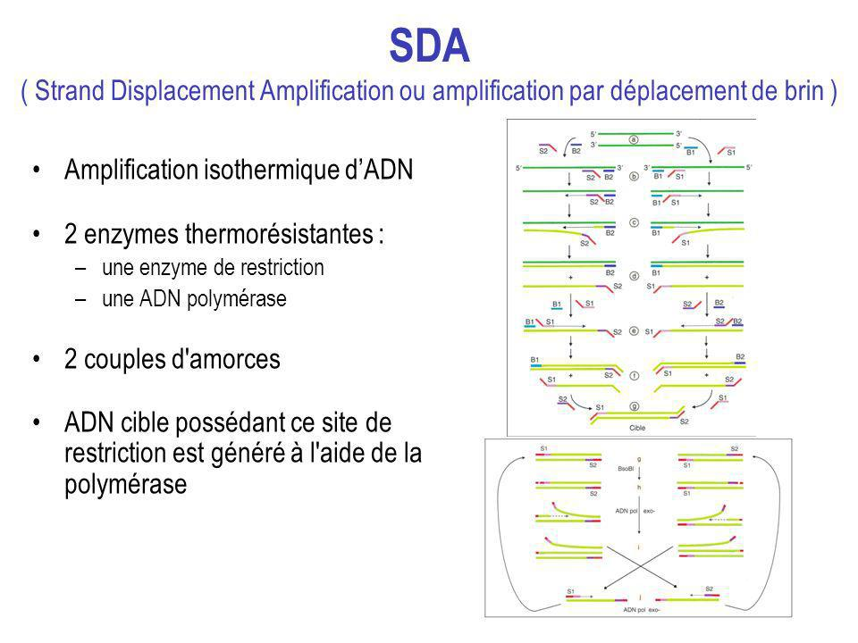 SDA ( Strand Displacement Amplification ou amplification par déplacement de brin )