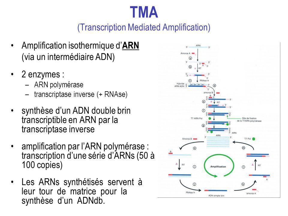 TMA (Transcription Mediated Amplification)