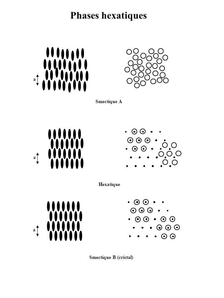 Phases hexatiques a Smectique A a Hexatique a Smectique B (cristal)