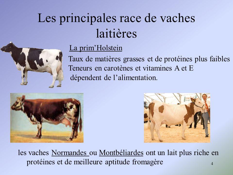 Les principales race de vaches laitières
