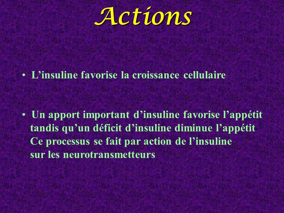 Actions L'insuline favorise la croissance cellulaire