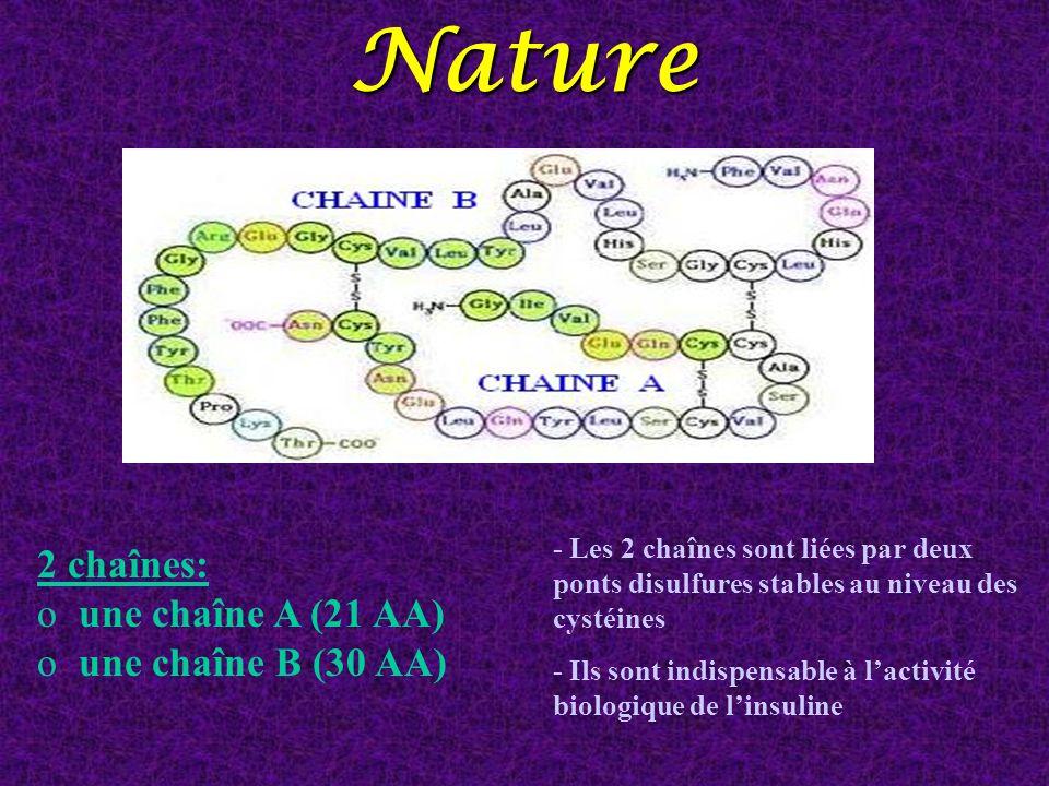 Nature 2 chaînes: une chaîne A (21 AA) une chaîne B (30 AA)