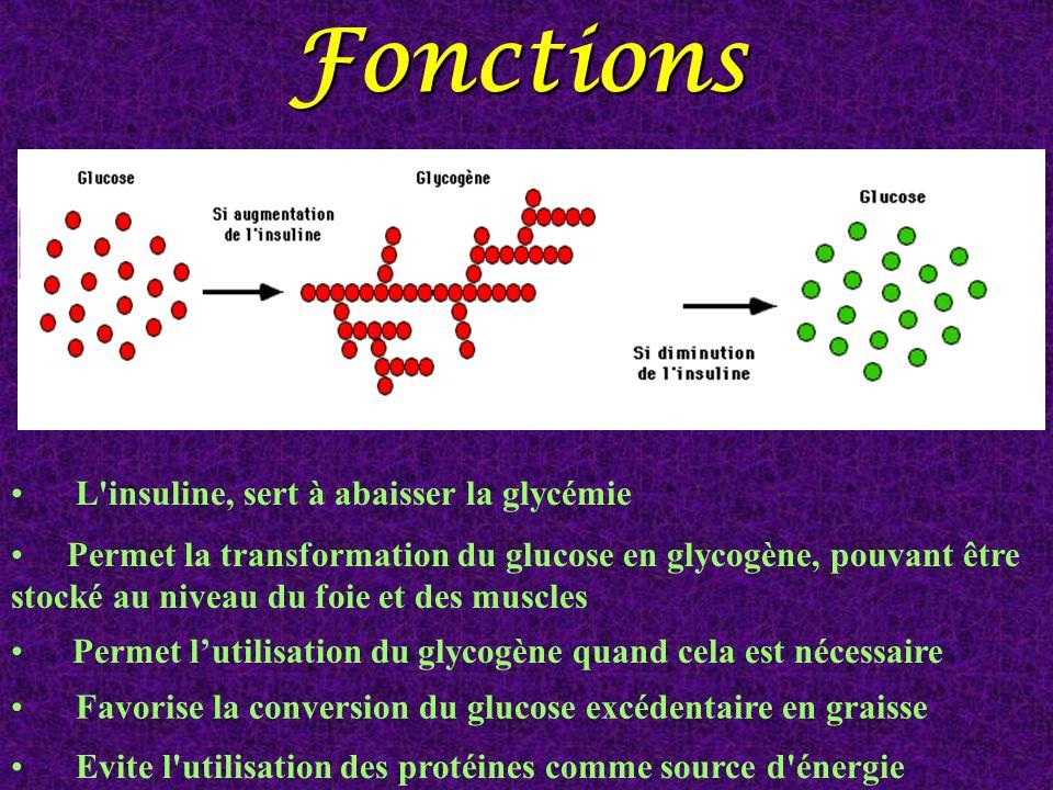 Fonctions L insuline, sert à abaisser la glycémie