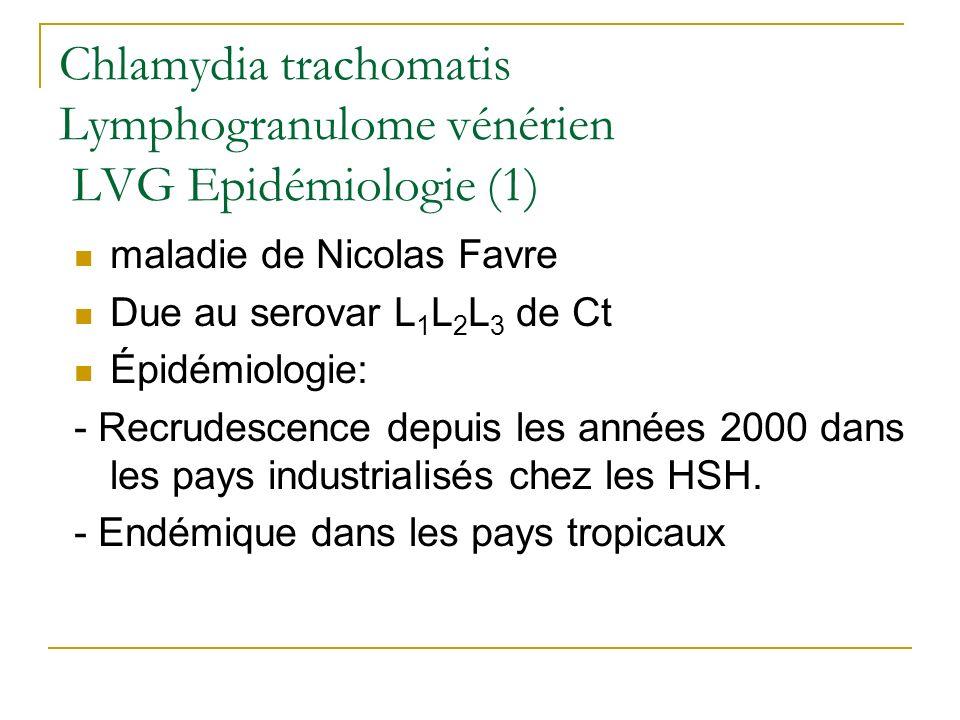 Chlamydia trachomatis Lymphogranulome vénérien LVG Epidémiologie (1)
