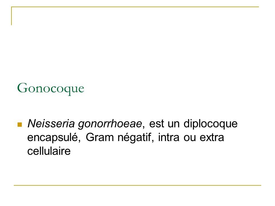 GonocoqueNeisseria gonorrhoeae, est un diplocoque encapsulé, Gram négatif, intra ou extra cellulaire.