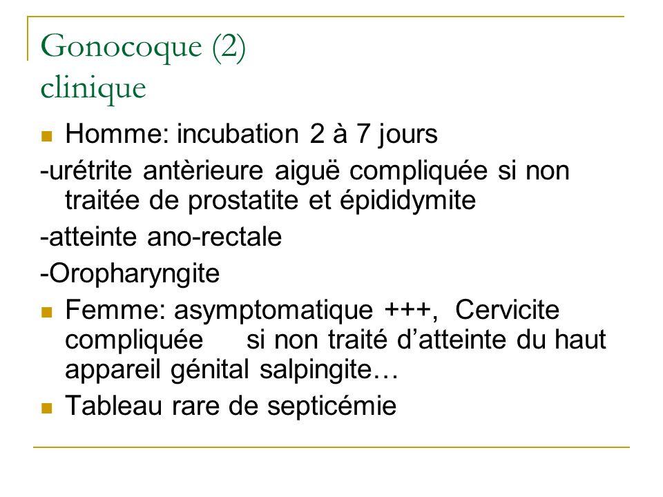 Gonocoque (2) clinique Homme: incubation 2 à 7 jours