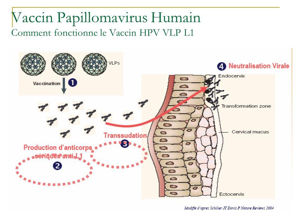 Vaccin Papillomavirus Humain Comment fonctionne le Vaccin HPV VLP L1
