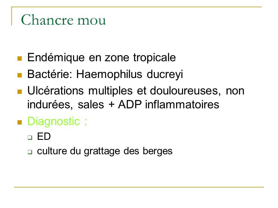 Chancre mou Endémique en zone tropicale Bactérie: Haemophilus ducreyi
