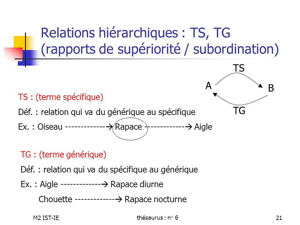 Relations hiérarchiques : TS, TG (rapports de supériorité / subordination)