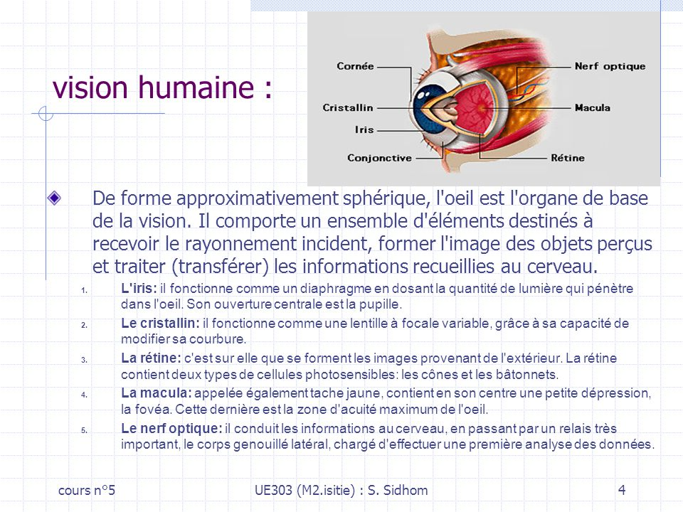 vision humaine :