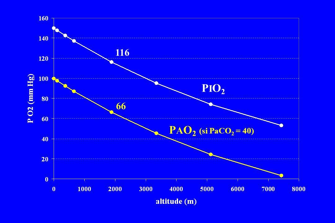 116 PIO2 66 PAO2 (si PaCO2 = 40)