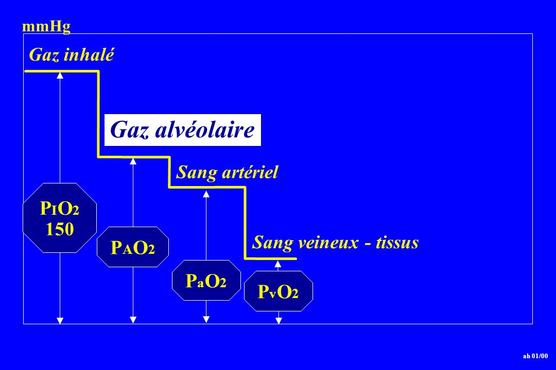 Gaz alvéolaire PIO2 PAO2 PaO2 PvO2 Gaz inhalé Sang artériel 150