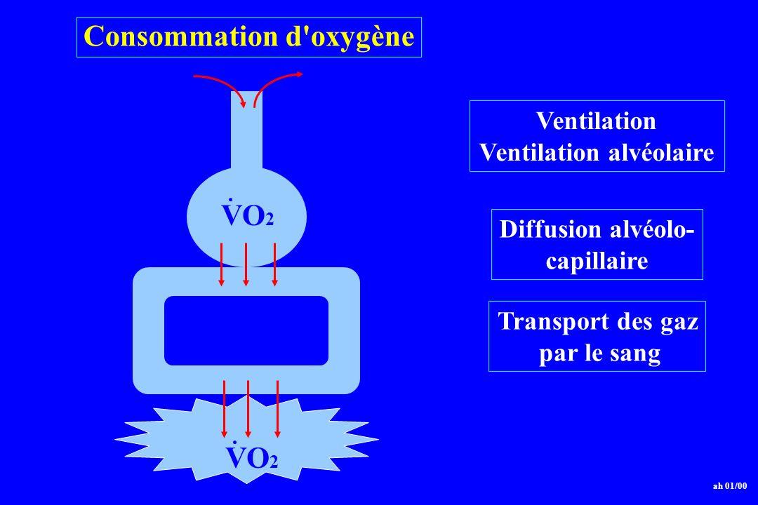 Ventilation alvéolaire