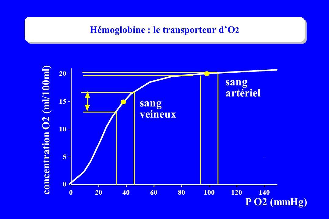 Hémoglobine : le transporteur d'O2
