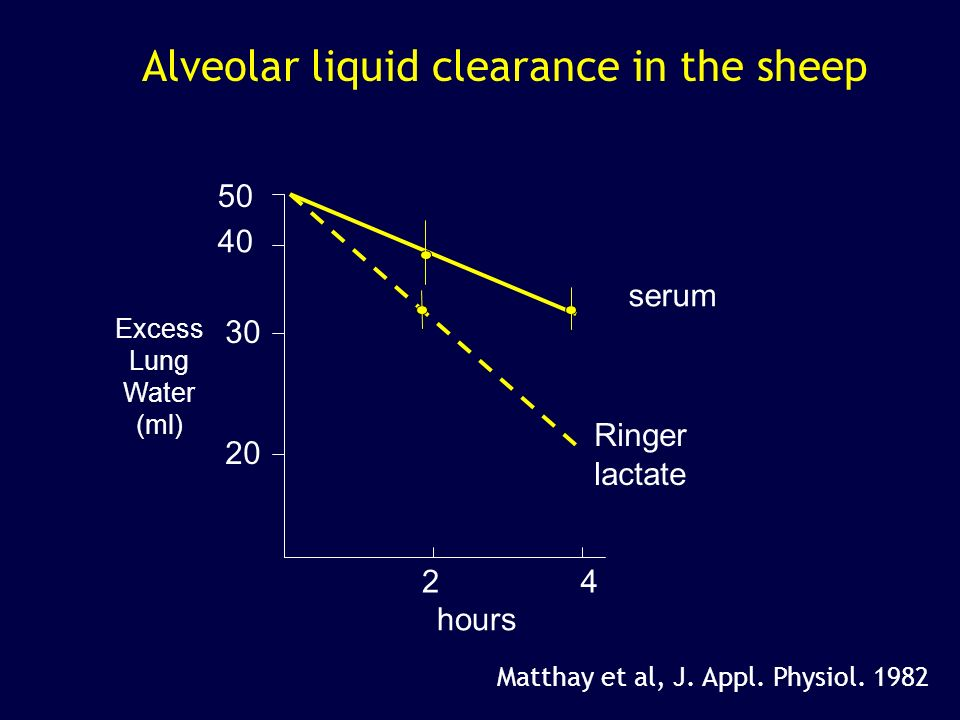 Alveolar liquid clearance in the sheep