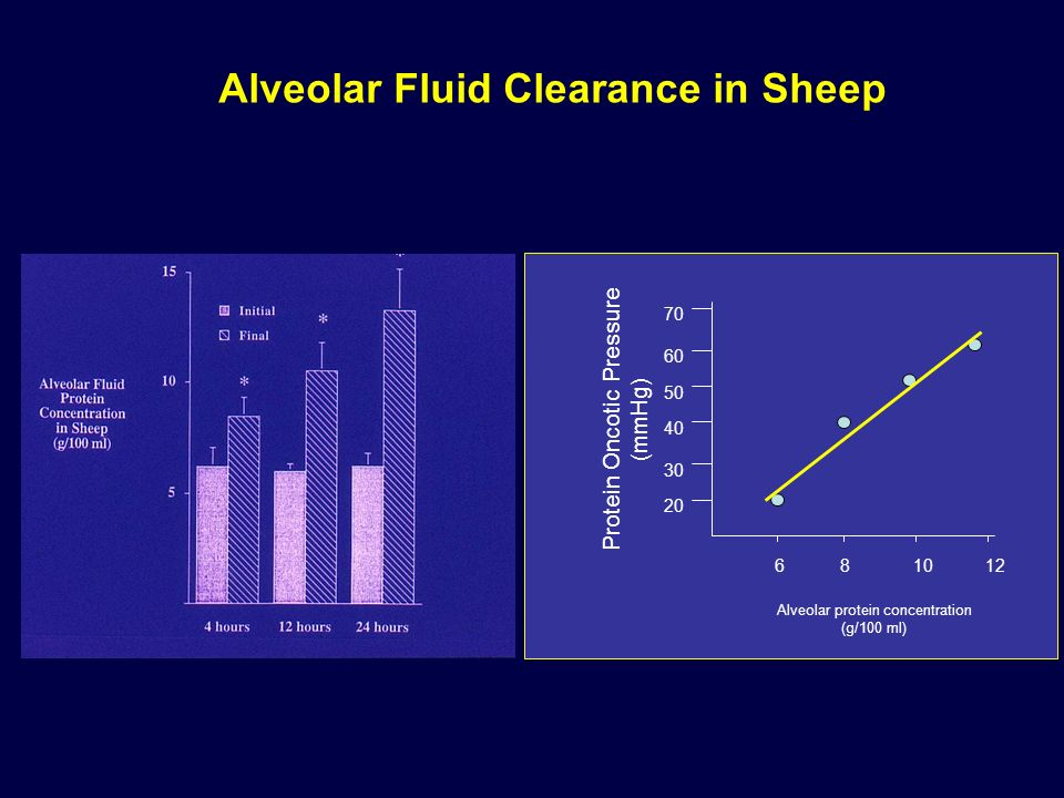 Alveolar Fluid Clearance in Sheep