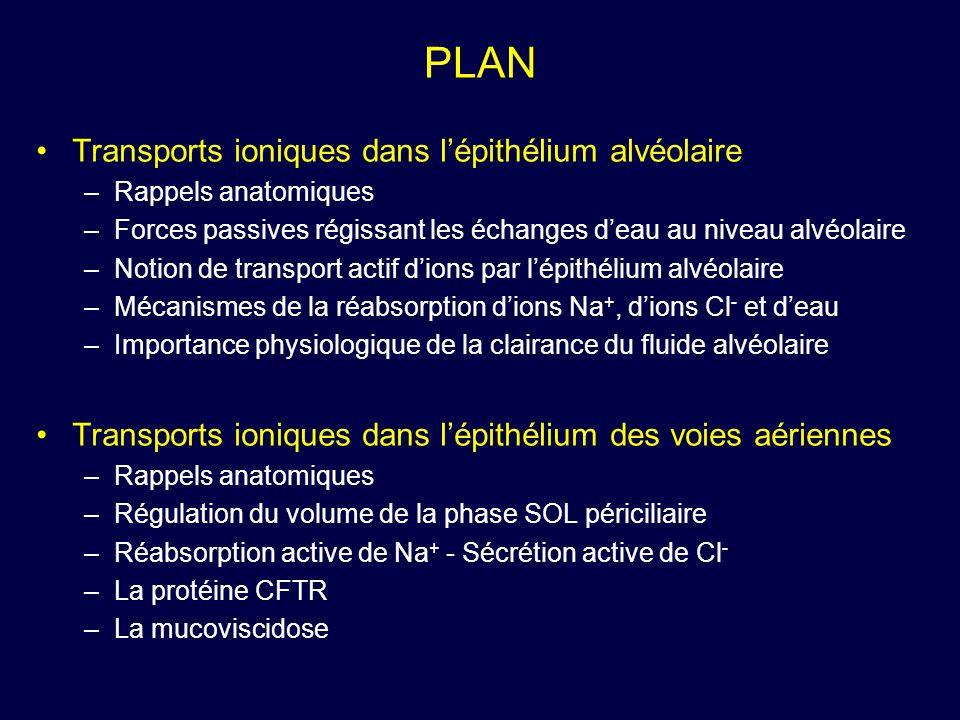 PLAN Transports ioniques dans l'épithélium alvéolaire