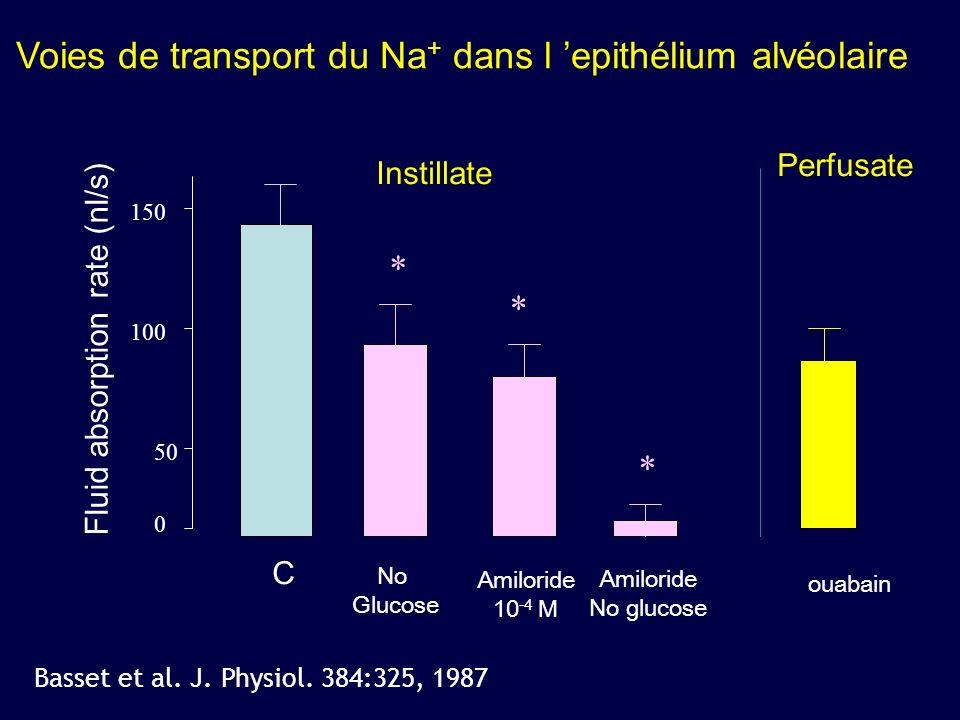 Voies de transport du Na+ dans l 'epithélium alvéolaire