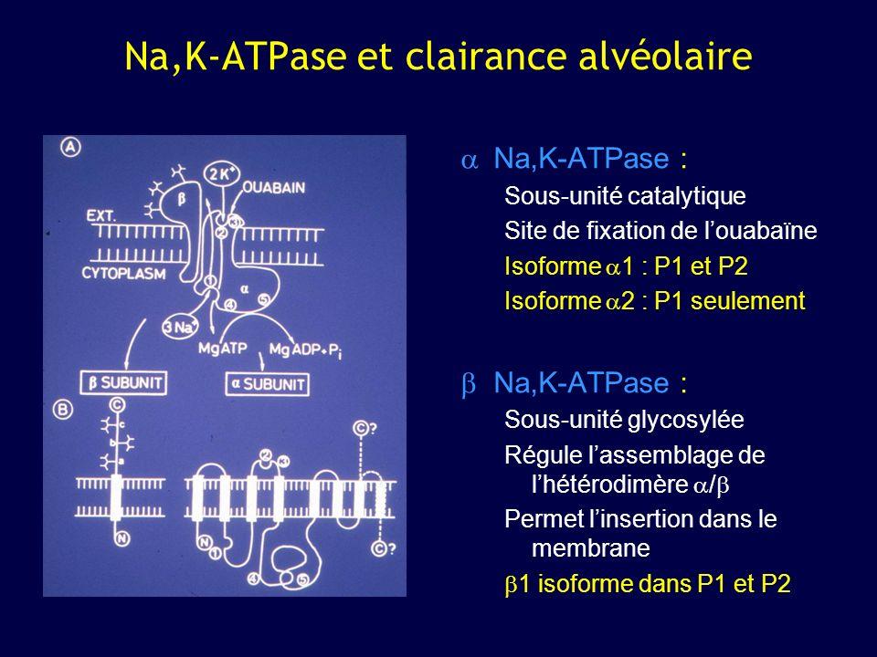 Na,K-ATPase et clairance alvéolaire