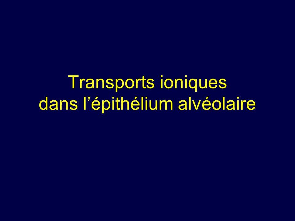 Transports ioniques dans l'épithélium alvéolaire