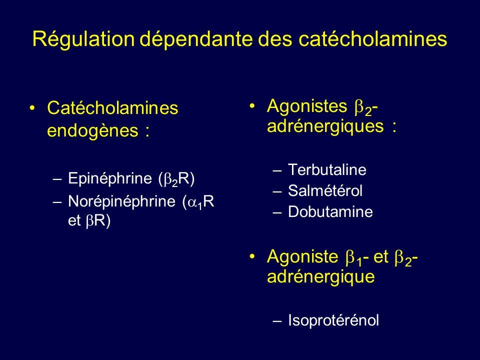 Régulation dépendante des catécholamines
