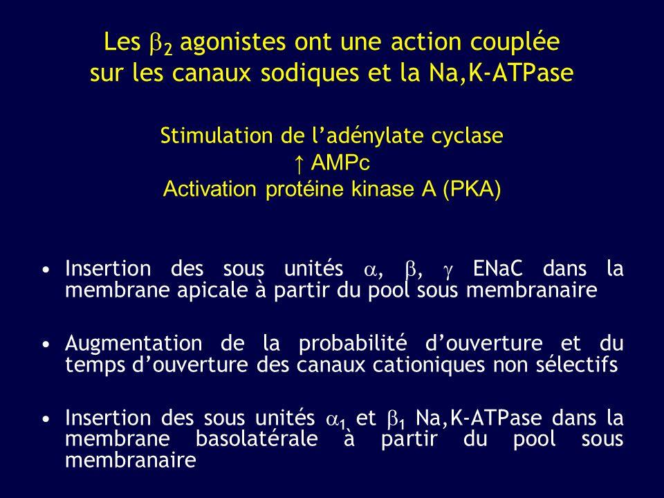 Les b2 agonistes ont une action couplée sur les canaux sodiques et la Na,K-ATPase