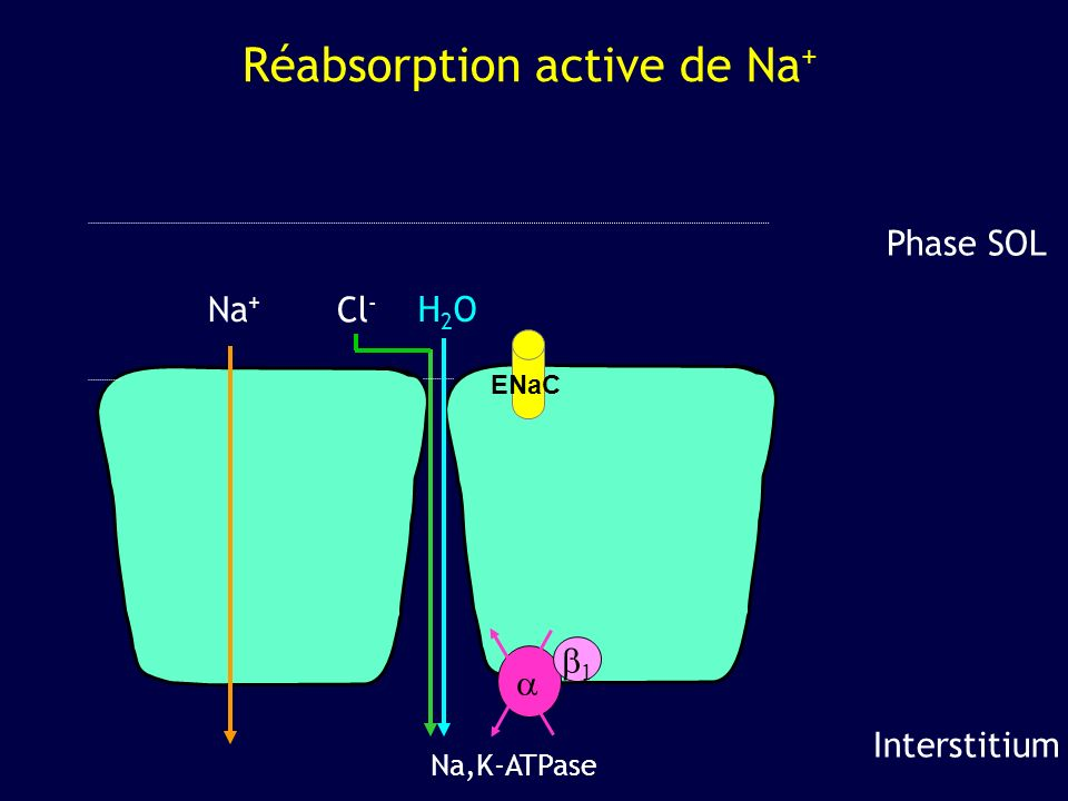Réabsorption active de Na+