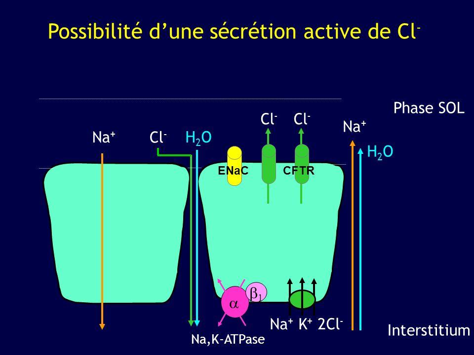 Possibilité d'une sécrétion active de Cl-