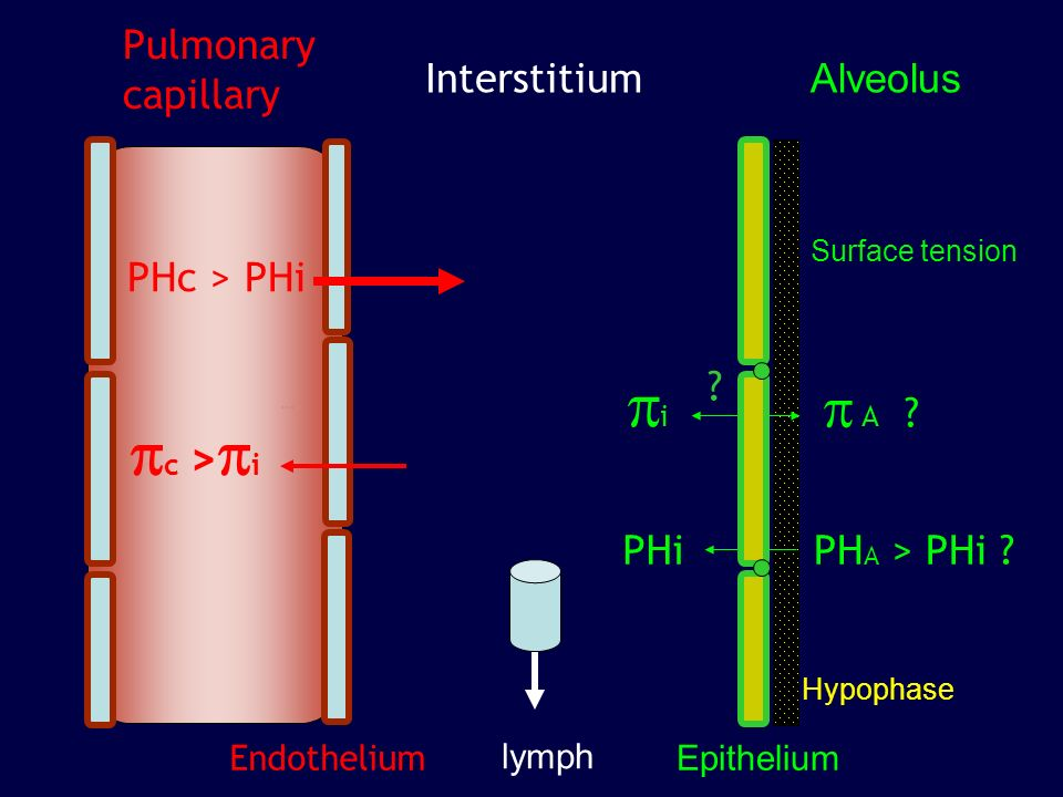 pi pc >pi p A Pulmonary capillary Interstitium Alveolus