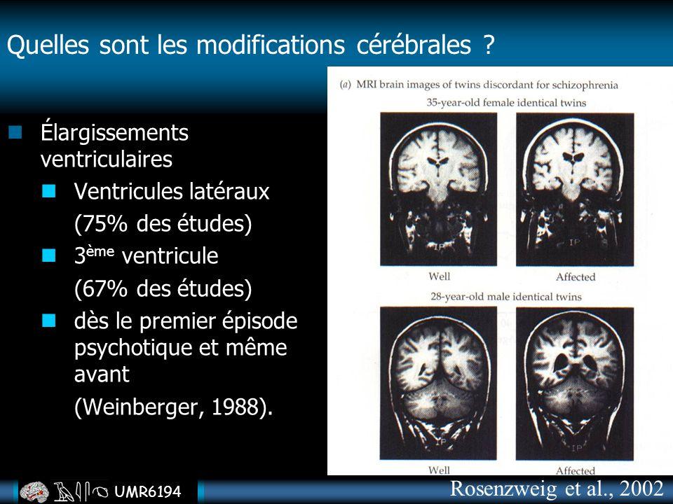 Quelles sont les modifications cérébrales