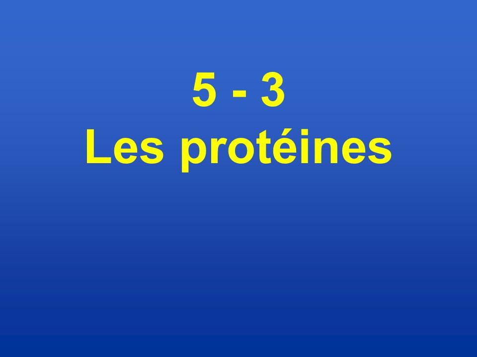5 - 3 Les protéines